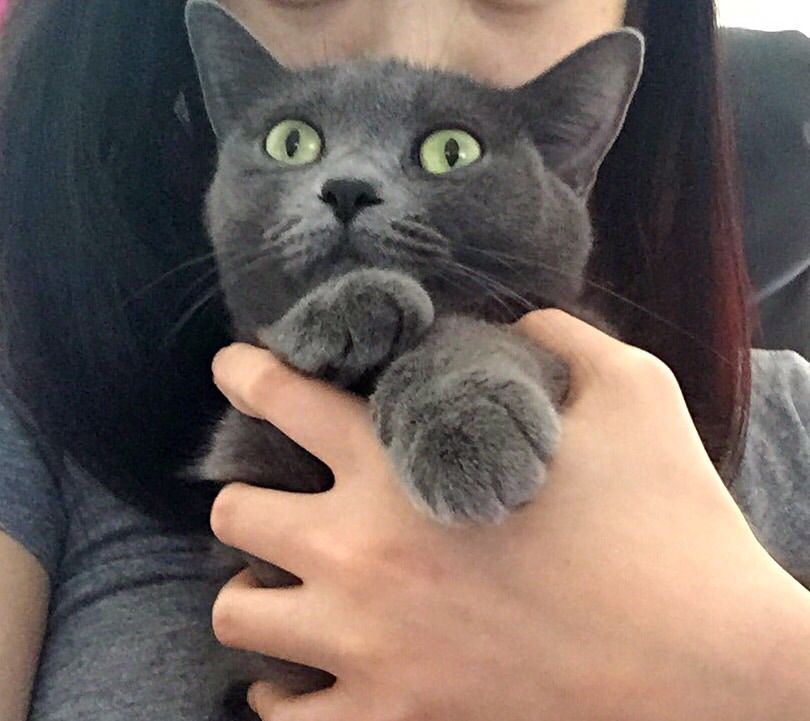 Lost Cat Domestic Short Hair London On Canada N6h 0e3 Lost Cat Losing A Pet Domestic Short Hair