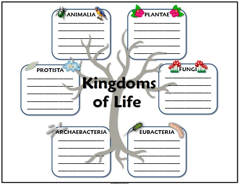 Science Journal Taxonomy And Kingdoms Of Life Science