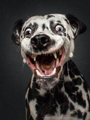 Photo of Snapshots – Dogs Catching Treats