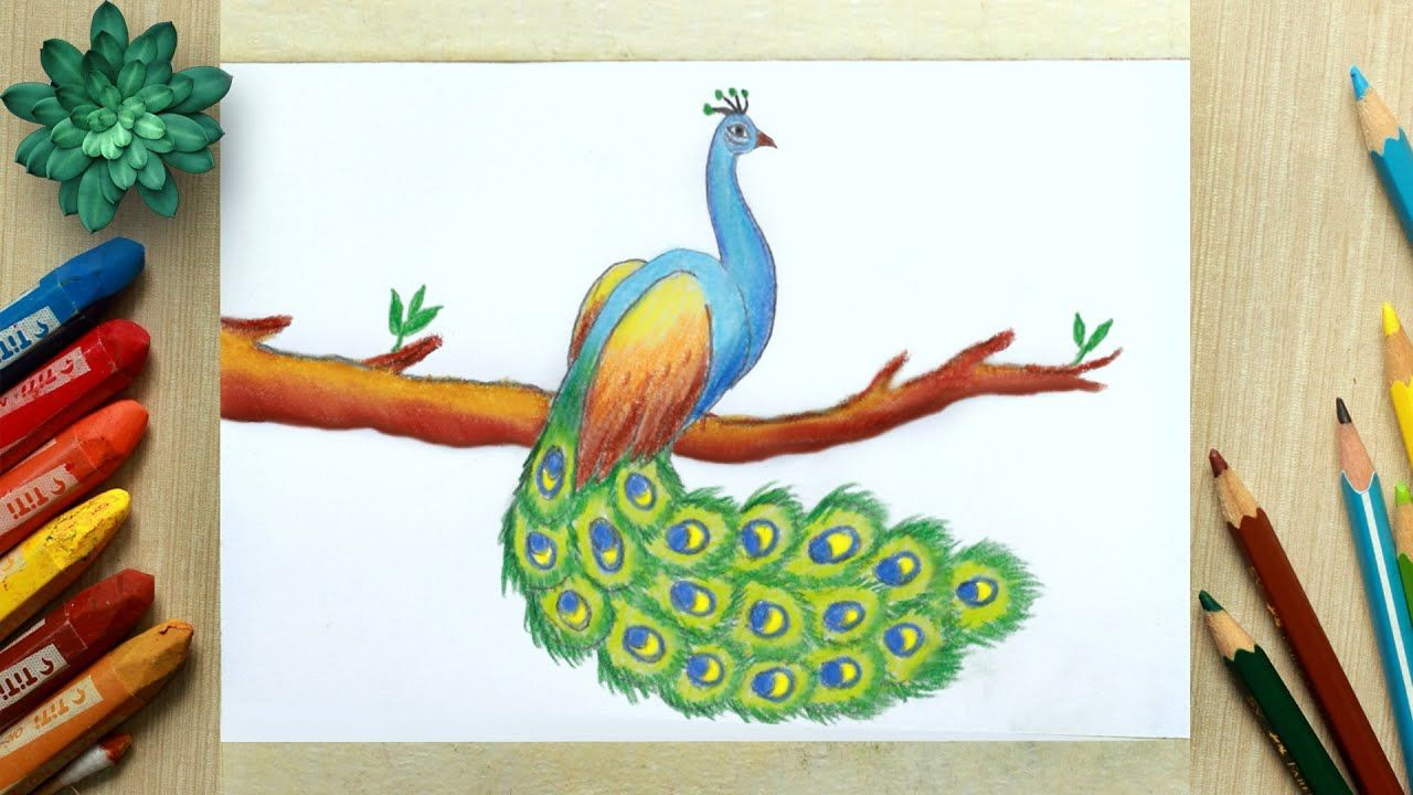 Peacock Drawing Easy Peacock Drawing With Color Peacock Bird Drawing In 2020 Peacock Drawing Peacock Drawing With Colour Easy Drawings