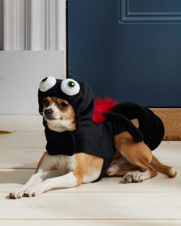 Stunning 19 Dog Halloween Costumes Collection Dog Halloween