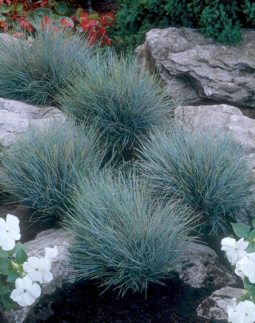Pin by Becky Washnock Campbell on Front yard | Small front ... on Non Grass Backyard Ideas id=28247