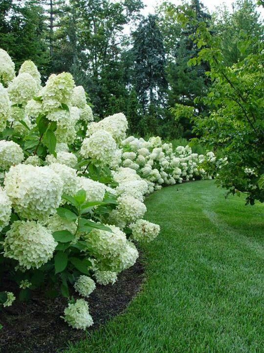 Um jardim para cuidar AGAPANTOS Garden Pinterest Hortensias