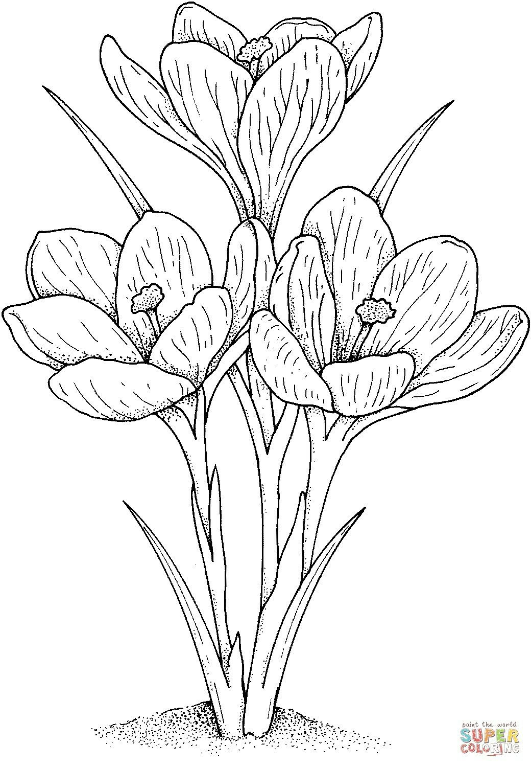 Pin by rita on basteln pinterest coloring books flowers and