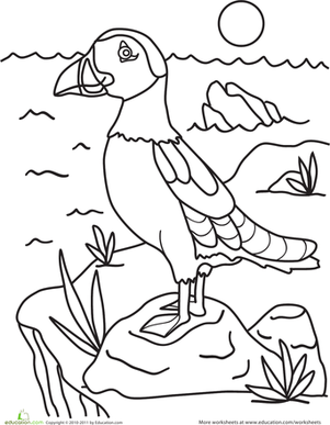 Kindergarten Animals Worksheets Puffin Coloring Page