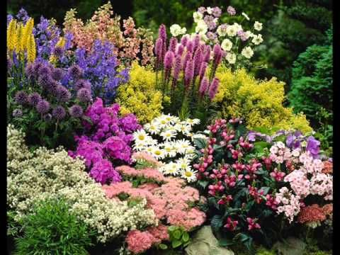 flower garden ideas around trees i perennial garden border design