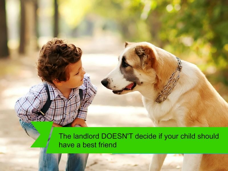 Reason 7 No Pet Restrictions With Images Home Buying