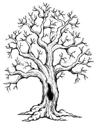 Ağaç çizimleri Googleda Ara çizimler Oak Tree Drawings Tree