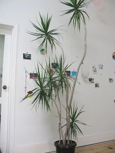 Palm Tree Trunk Ideas