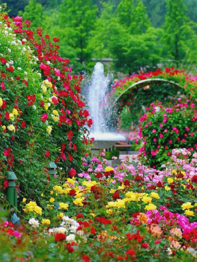 Garden Of Flowers Amazing Nature Photography Dream Garden Landscape