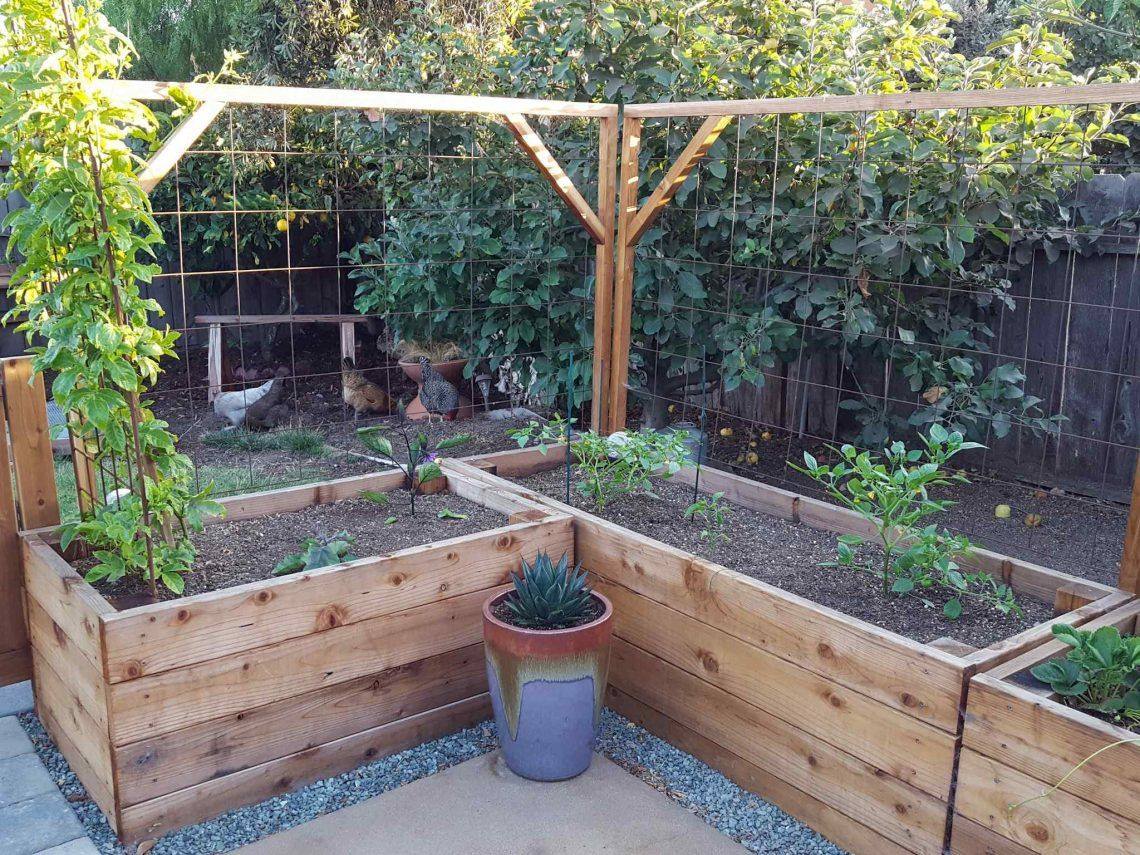How To Build A Trellis Inexpensive Easy Designs In 2020 With