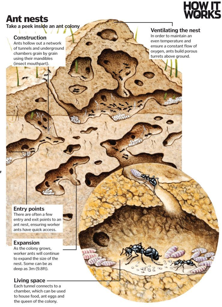 Read Look inside an ant nest to see how they build