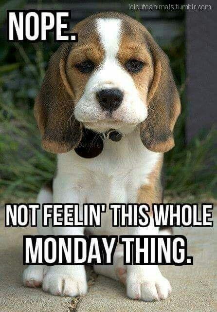 Monday Puppy Funny Monday Memes Monday Humor Monday Memes