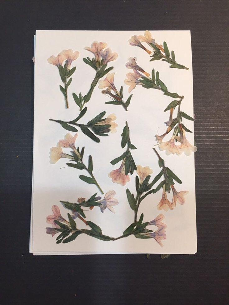 Ich freue mich sehr über den neuesten Artikel in meinem #etsy-Shop: Real Pressed Flowers – …
