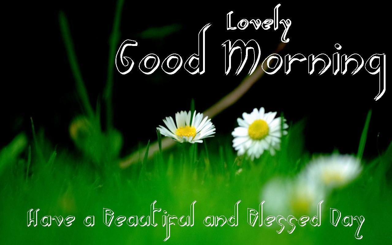 Download Good Morning Images Flowers Wallpapers Pictures Photos