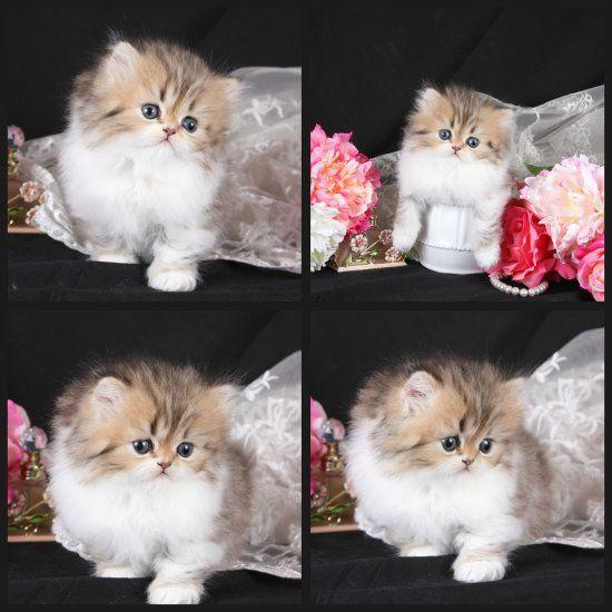 obsessing over kittens...