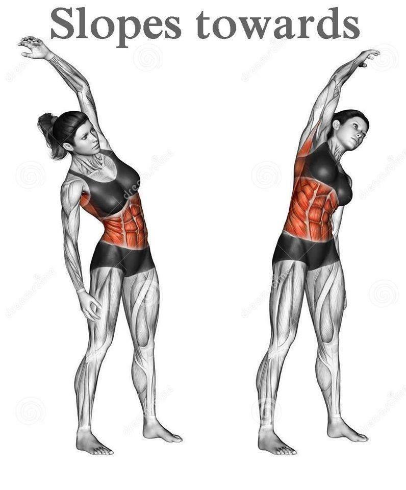 Pin de Miguel Fdez Gcia en Yoga Anatomía/Fisiología | Pinterest ...