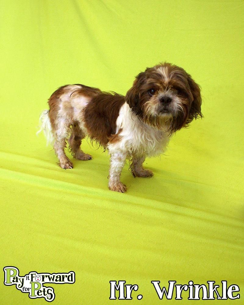 Adopt Mr Winkle On Petfinder Shih Tzu Dog Pet Life Cat Adoption