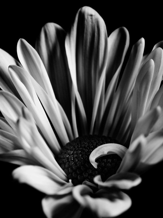 Black And White Flower Photography Wall Art Home Decor Digital