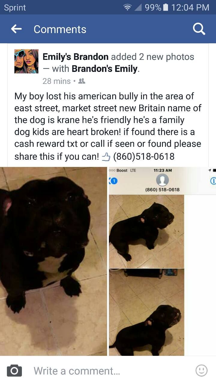 Lost In New Britain Https M Facebook Com Photo Php Fbid 918259238318976 Id 100004047264939 Set O 513849385403608 Blac Losing A Dog Family Dogs Police Canine