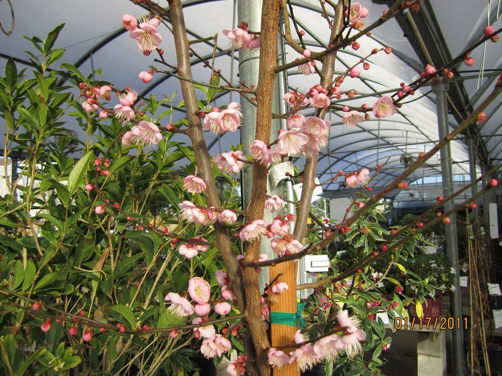 Yamagami S Nursery Cupertino Ca For Water Plants