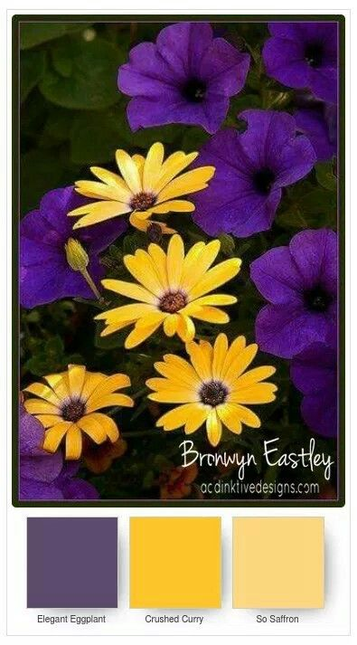 Daisy delight, color combinations Color Combos Pinterest