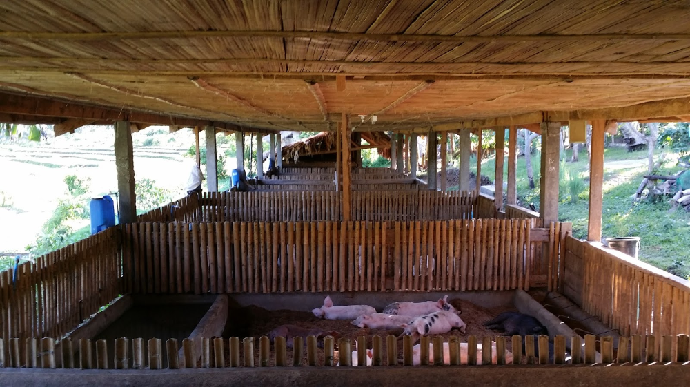 Piggery House Design Philippines House Interior In 2020 Pig House Bamboo House Philippine Houses