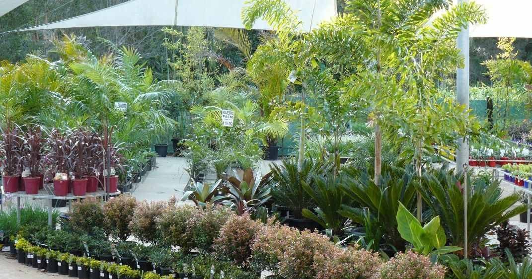 How To Start A Plant Nursery Business