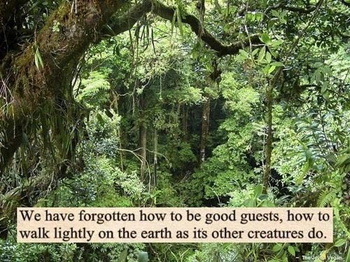 We have forgotten to be good guests, to walk lightly on the earth as it's other creatures do.