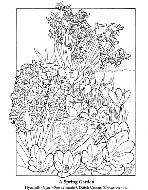 spring turtle and flowers coloring page the flower garden coloring book dover publications - Spring Garden Coloring Pages