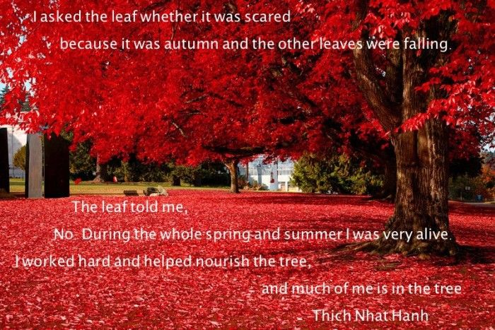 Updates Sing Along With This Prayer For Thich Nhat Hanh S Health