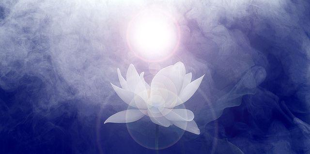 Lotus Flower Imgp7691 1000 Sun D Flower Painting Images Lotus Flower Images Lotus Flower Painting