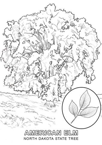 Click To See Printable Version Of North Dakota State Tree Coloring