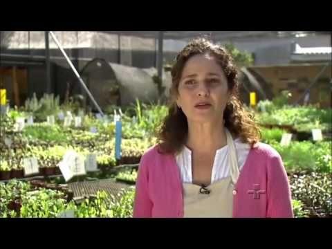 Reporter Eco com Silvia Jeha