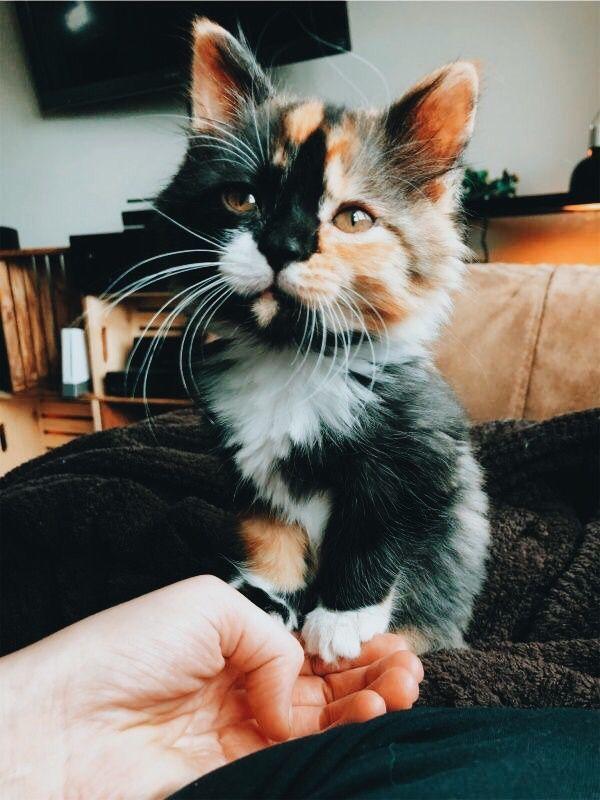 Jonathan Alonso - Animaux domestiques | Les chats | Chiens - Les animaux les plus mignons Site: ejonathanal ... ...   - Catto -