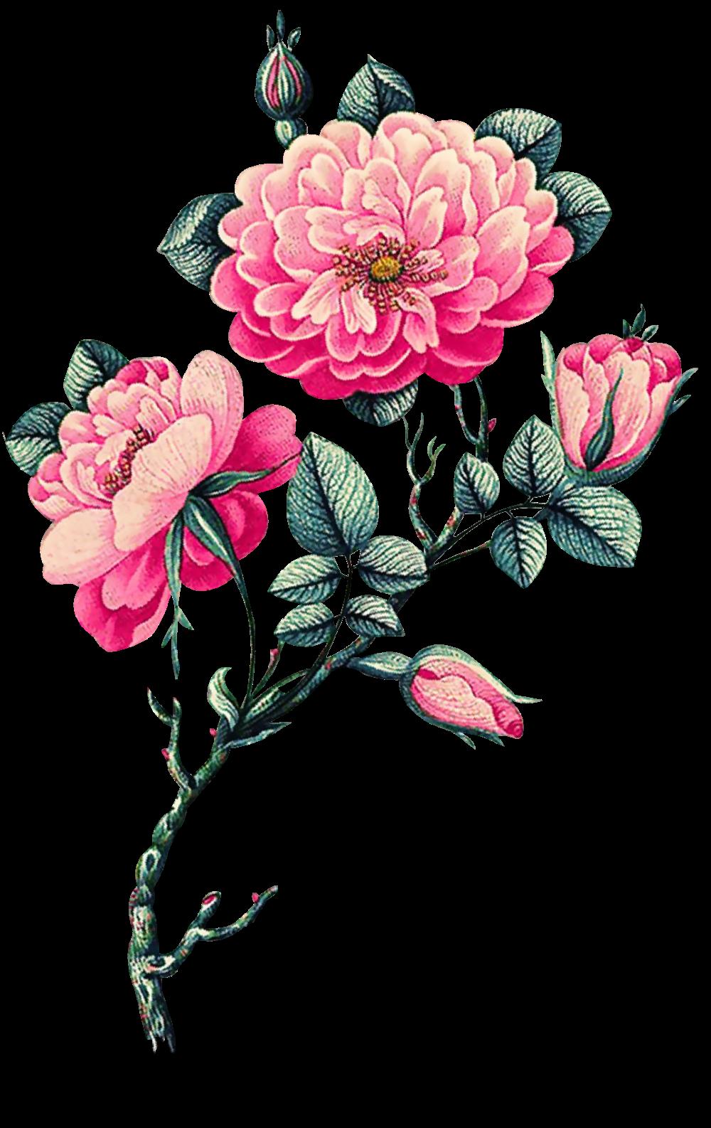 Pin De Grace En Flores Flores Pintadas Acuarela Arte Con Flores