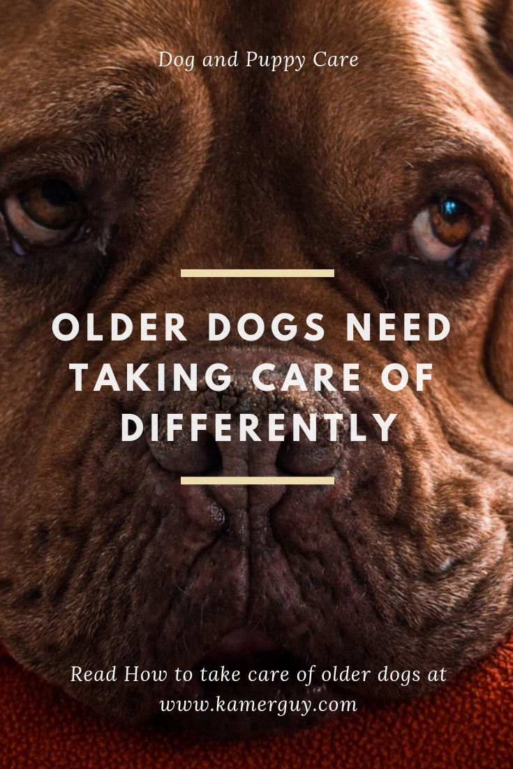 Older Dogs Need Taking Care Of Differently Elderly Dogs Older