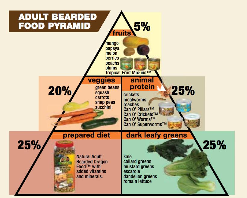 Complete List Of Bearded Dragon Food