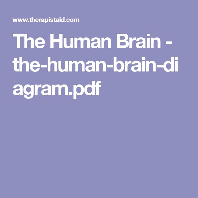 The human brain the human brain diagrampdf brain pinterest the human brain the human brain diagrampdf ccuart Choice Image