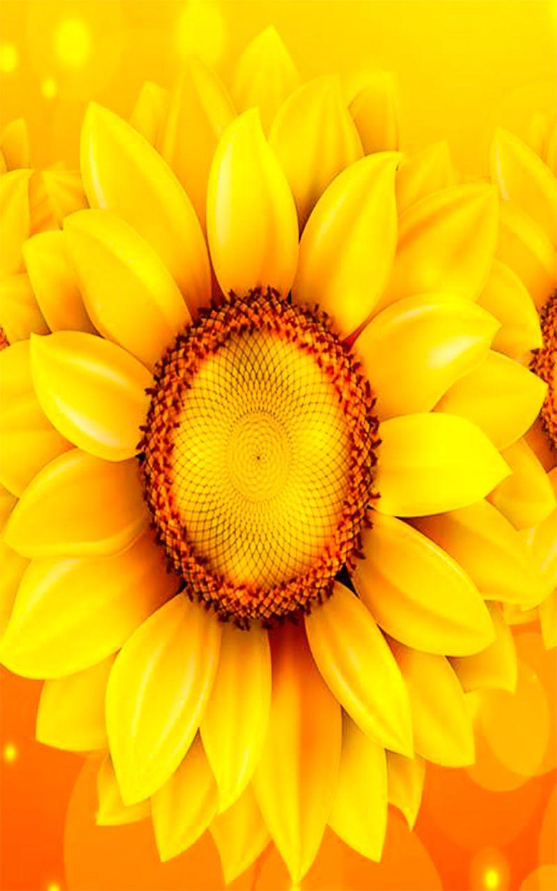 sunflower wallpaper for android | Sunflower wallpaper ...