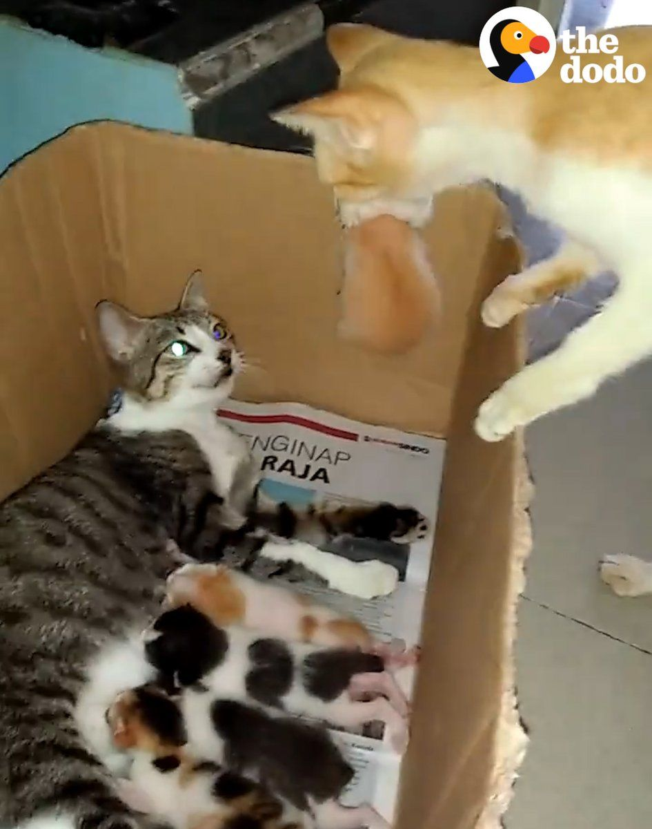 The Dodo On Twitter This Cat Dad S So Proud Of His Babies And He S Making Sure They Re All Snuggled Up With Mom Cat Dad Kittens Pretty Cats