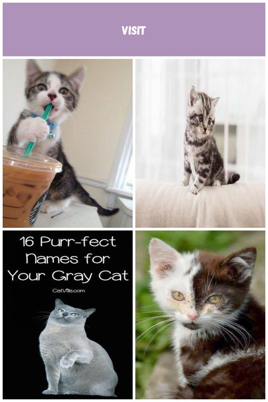Kitten Names For Hyper Cats Kittens Names Kitten Names For Hyper Cats Cats And Kittens Kitten Names Cats