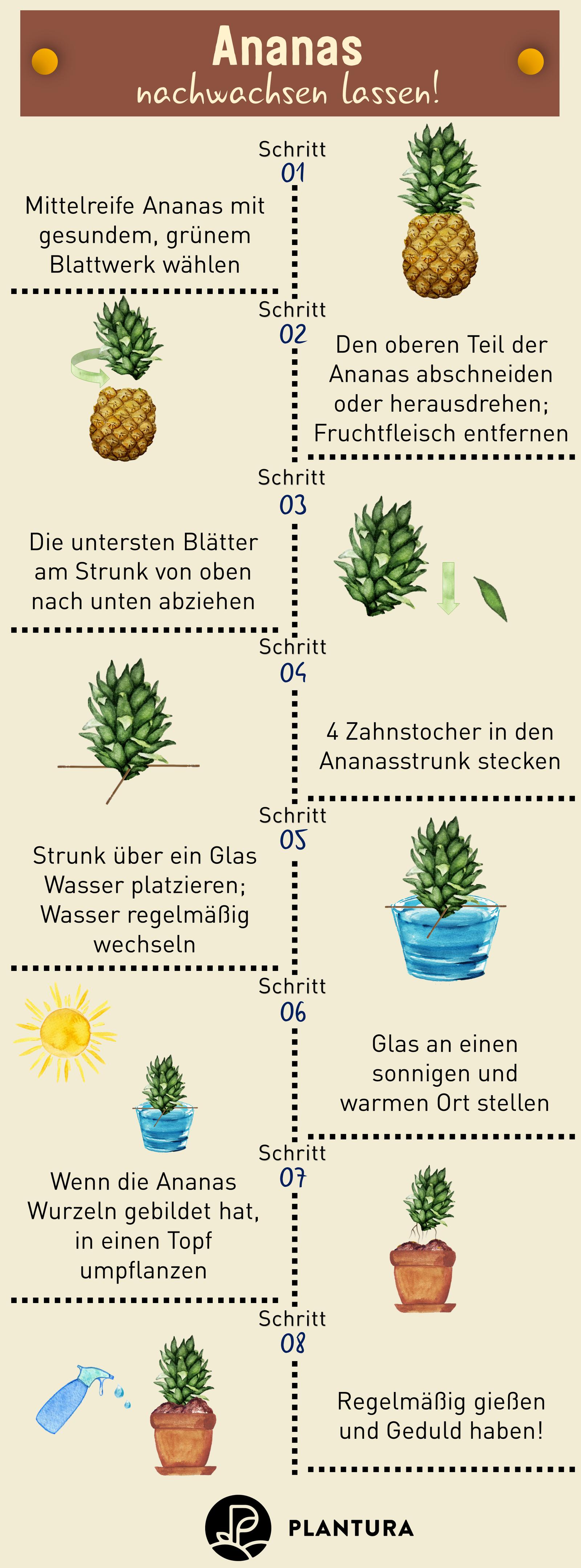 8 Gemüse wiederverwenden Ideen   pflanzen, gemüse, kräuter anpflanzen