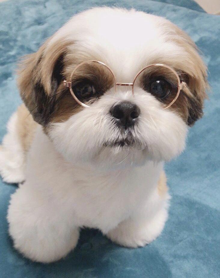 Photo of İsimsiz #cutepuppies Weitere Informationen finden Sie auf unserer Website …