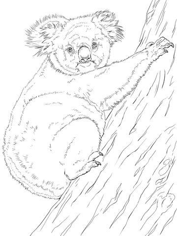 Koala Printable Coloring Pages Video Taken