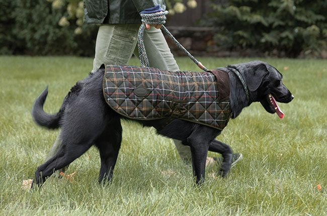 Barbour Tartan Dog Jacket Dog Jacket Dogs Four Legged