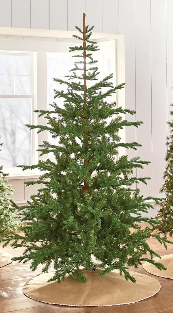7 5 Norwegian Spruce Martha Stewart 249 9318500610 Http Www Homedepot Com P Martha Stewart Li Live Christmas Trees Christmas Tree Holiday Christmas Tree