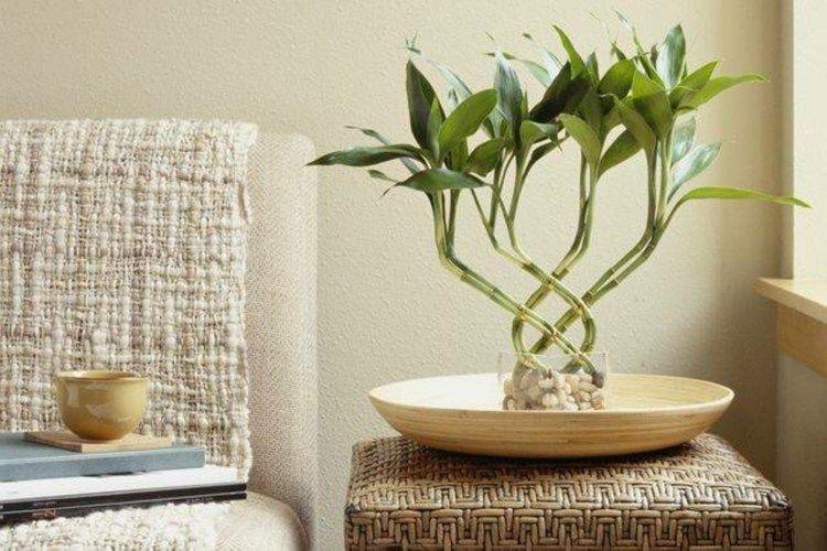 Examinez notre galerie de photos et laissez vous inspirer par nos idées élégantes de décoration avec des plantes dintérieur supportant la lumière faible