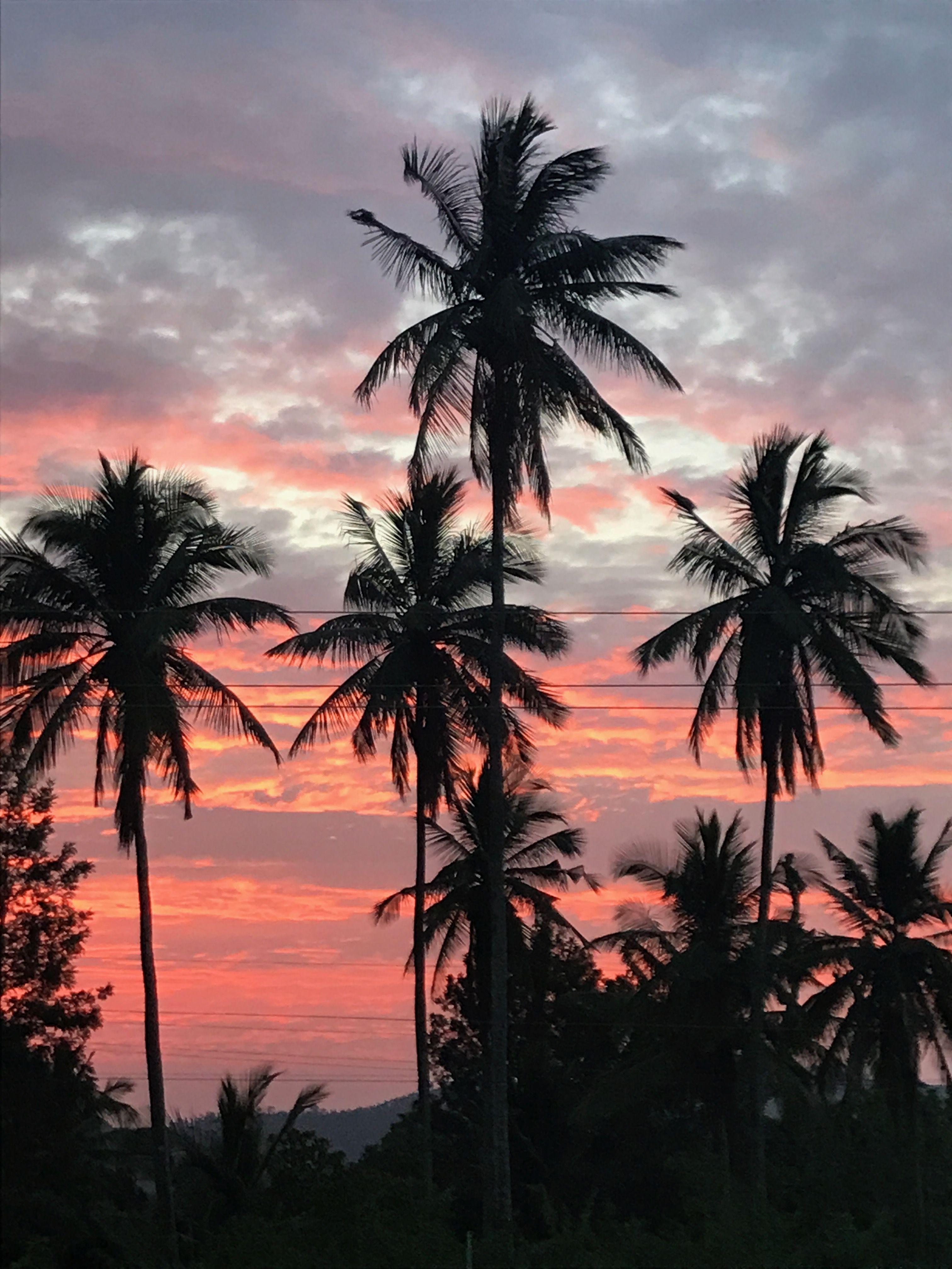 Pin By Frank Sua Rez Castelo On Sun Set Sky Aesthetic Nature Photography Palm Trees Wallpaper Palm trees sunset horizon sky clouds