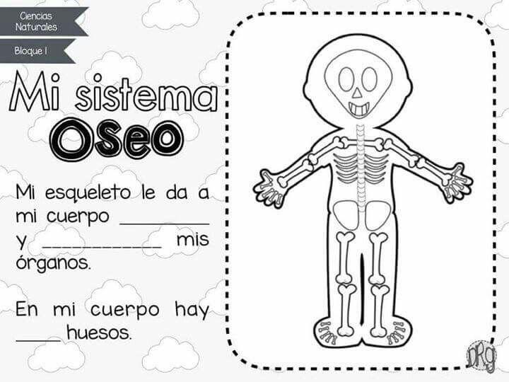Sistema óseo Maestrísima Sistemas Del Cuerpo Humano Actividades
